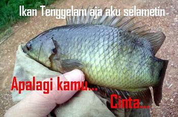 Meme Lucu Ikan Cupang