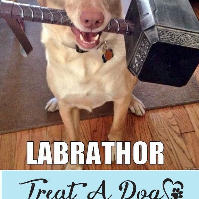 Funny Pictures About Thors Pet Oh And Cool Pics About Thors Pet Also Thors Pet P Os