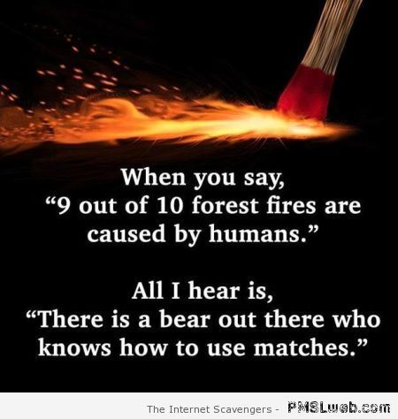 Funny Quote When You Say  Out Of  Forest Fires Are Caused By Humans All I Hear Is There Is Bear Out There Who Knows How To Use Matches