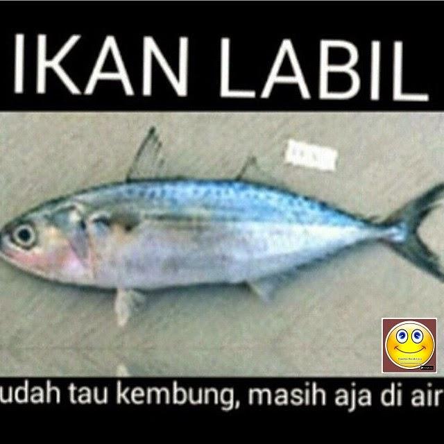 Ini Dia Ikan Labil