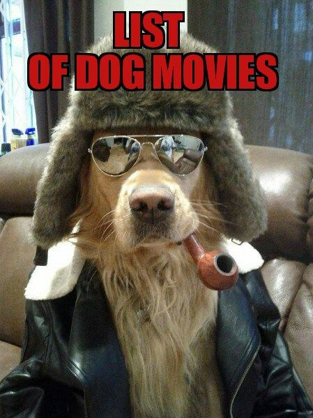 Dog Bad To The Bone Cute Animals Dogs Adorable Dog Puppy Animal Pets Lol Humor Funny Pictures Funny Animals Funny Pets Funny Dogs Funny Dog Images