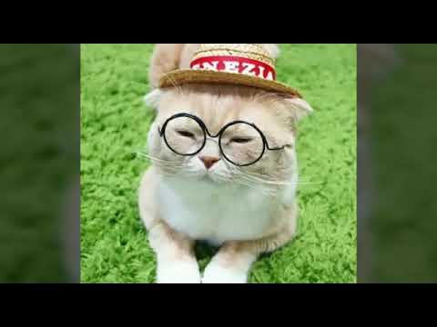 Kucing Lucu Pake Kacamata F F F F D