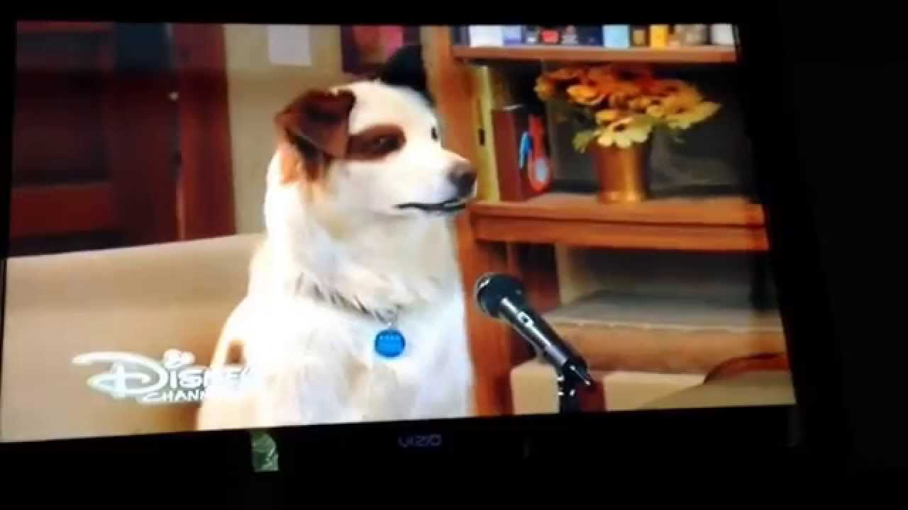Funny Stan Moments From Dog With A Blog Only On Disney Channel Comment On What You Think