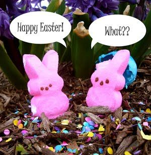 Happy Easter Pink Bunny Candy Funny Quote