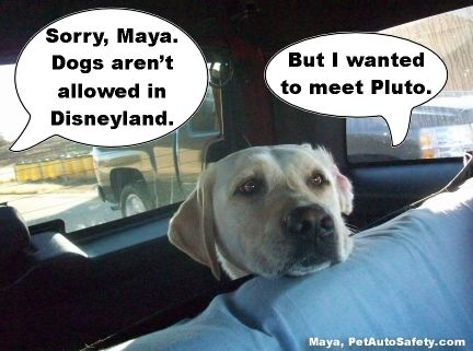Dogs In The Car Meme New Funny Dog Memes American Dog Blog