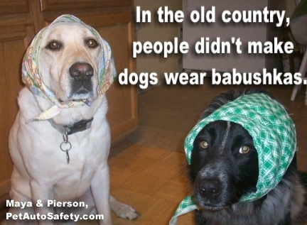 Dogs Wearing Babushkas