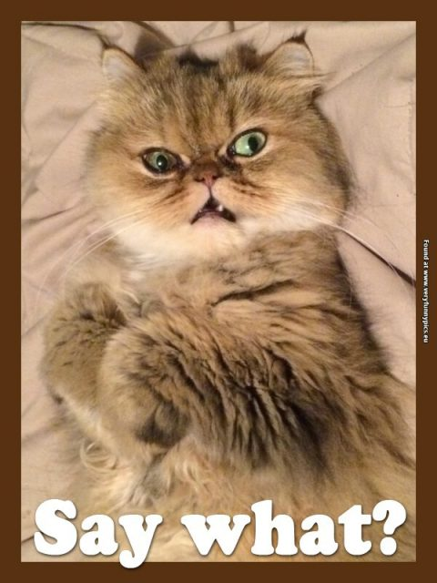 Funny Pictures Say What Cat