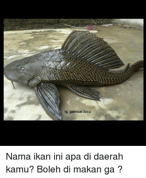Indonesian Language Ig Lucu Nama Ikan Ini Apa Di Daerah Kamu