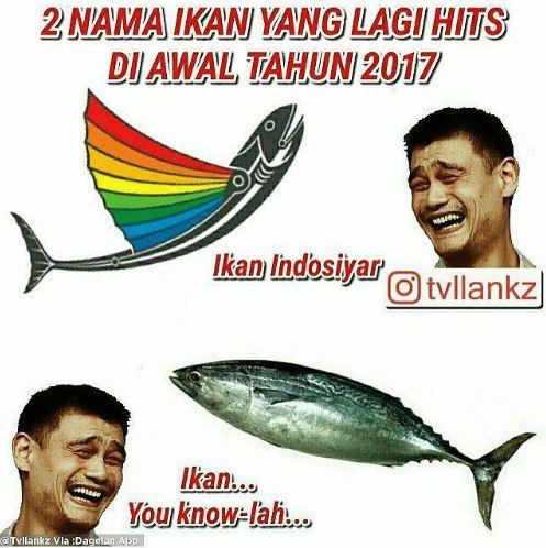 Meme Jenis Ikan Ini Kocak Banget Hati Hati Salah