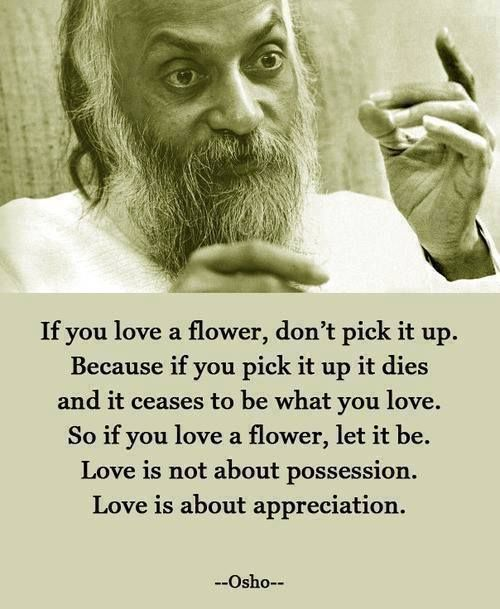 If You Love A Flower Dont Pick It Up Because If