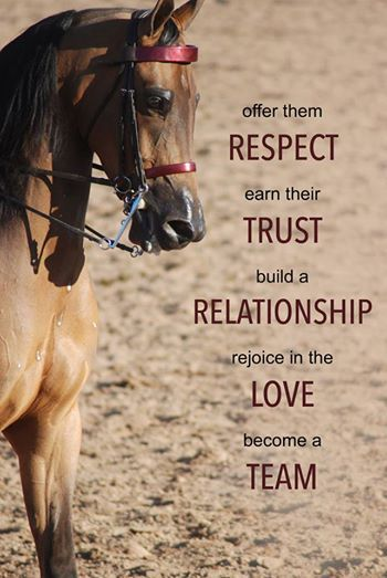 Theres No Respect Trust Love Relationship Or Teamwork When Using A Bit However