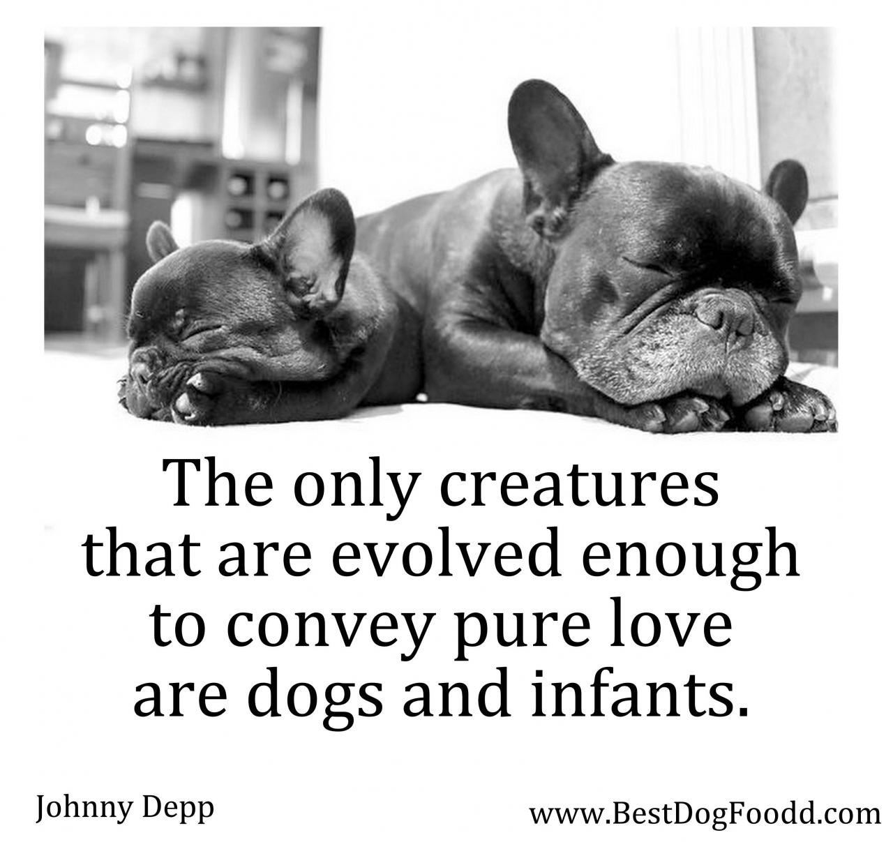 The Only Creatures That Are Evolved Enough To Convey Pure Love Are Dogs And Infants