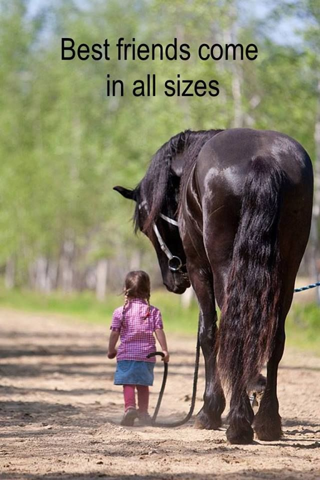 Gabriele Loves Beauty P O More Animal Love Quoteshorse
