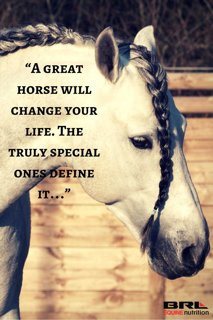 A Great Horse Will Change Your Life The Truly Special Ones Define It Inspirational Horse Quoteshorse Love