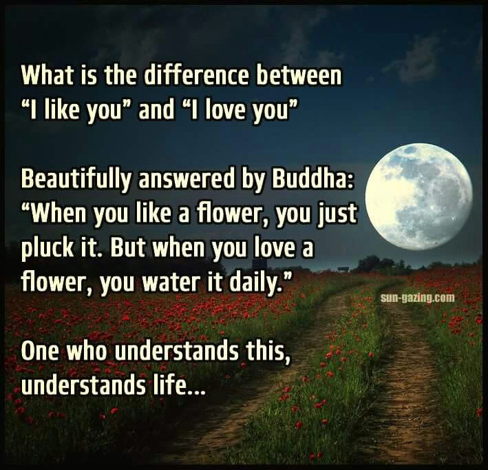 What Is The Difference Between I Like You And I Love You Beautifully Answered By Buddha When You Like A Flower You Just Pluck It
