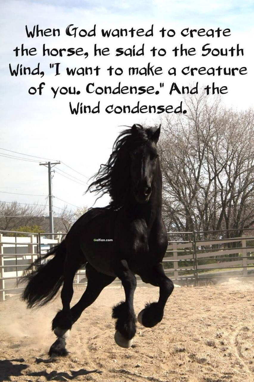 Horse Love Quotations