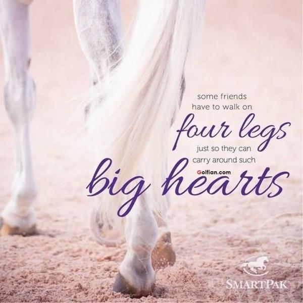 Horse Love Sayings