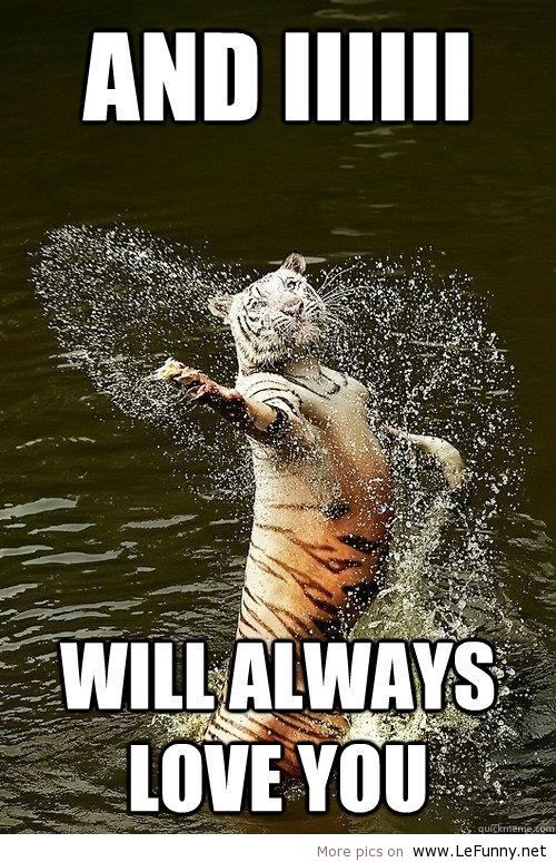 Tiger In Water Splash Forms Heart And I I I Will Always Love You Funny Animal Pictures