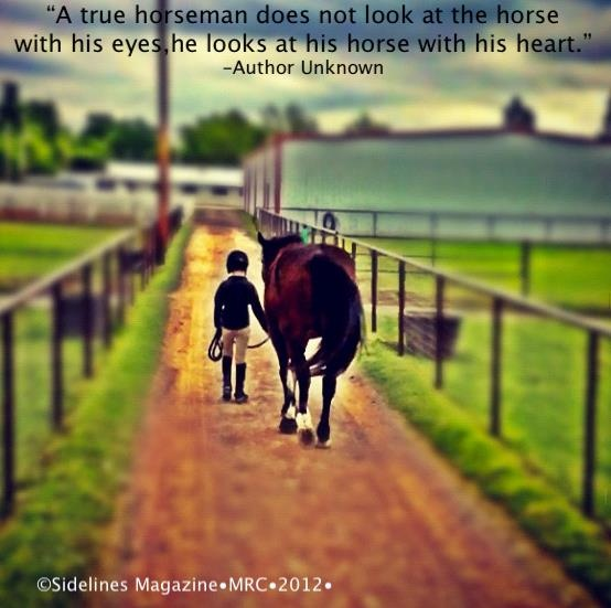 Horses Feel How You Look At Them