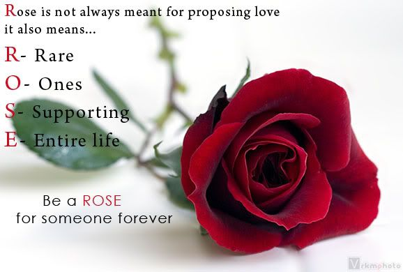 Images Of Roses With Quotes Meaning Of Rose