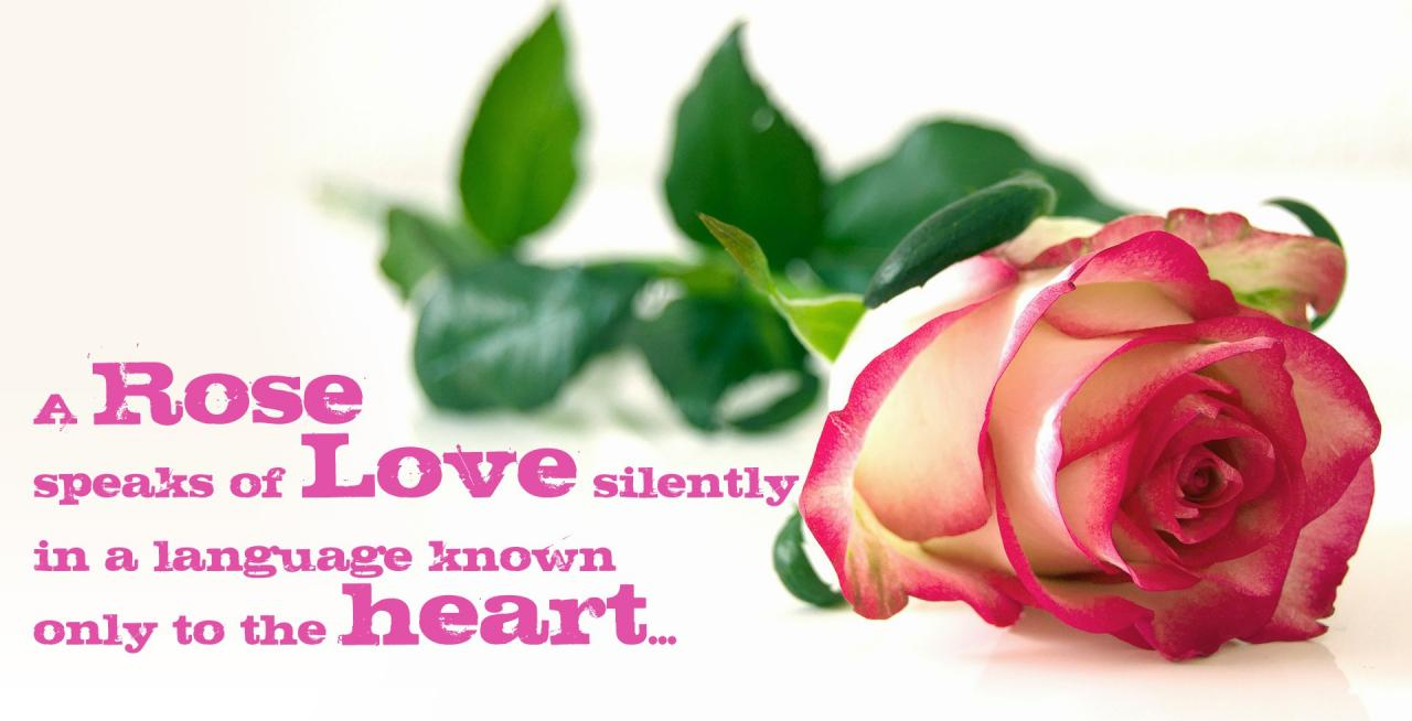 Awesome Love Quotes Hd Wallpapers_rose Love Quotes Hd