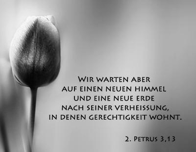 Tulpenbild Mit Bibelvers