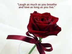 Roses Are Most Popular Flower In The World Red Roses Are The Symbol Of Love And Romance Just Have A Look Romantic Red Roses Pictures