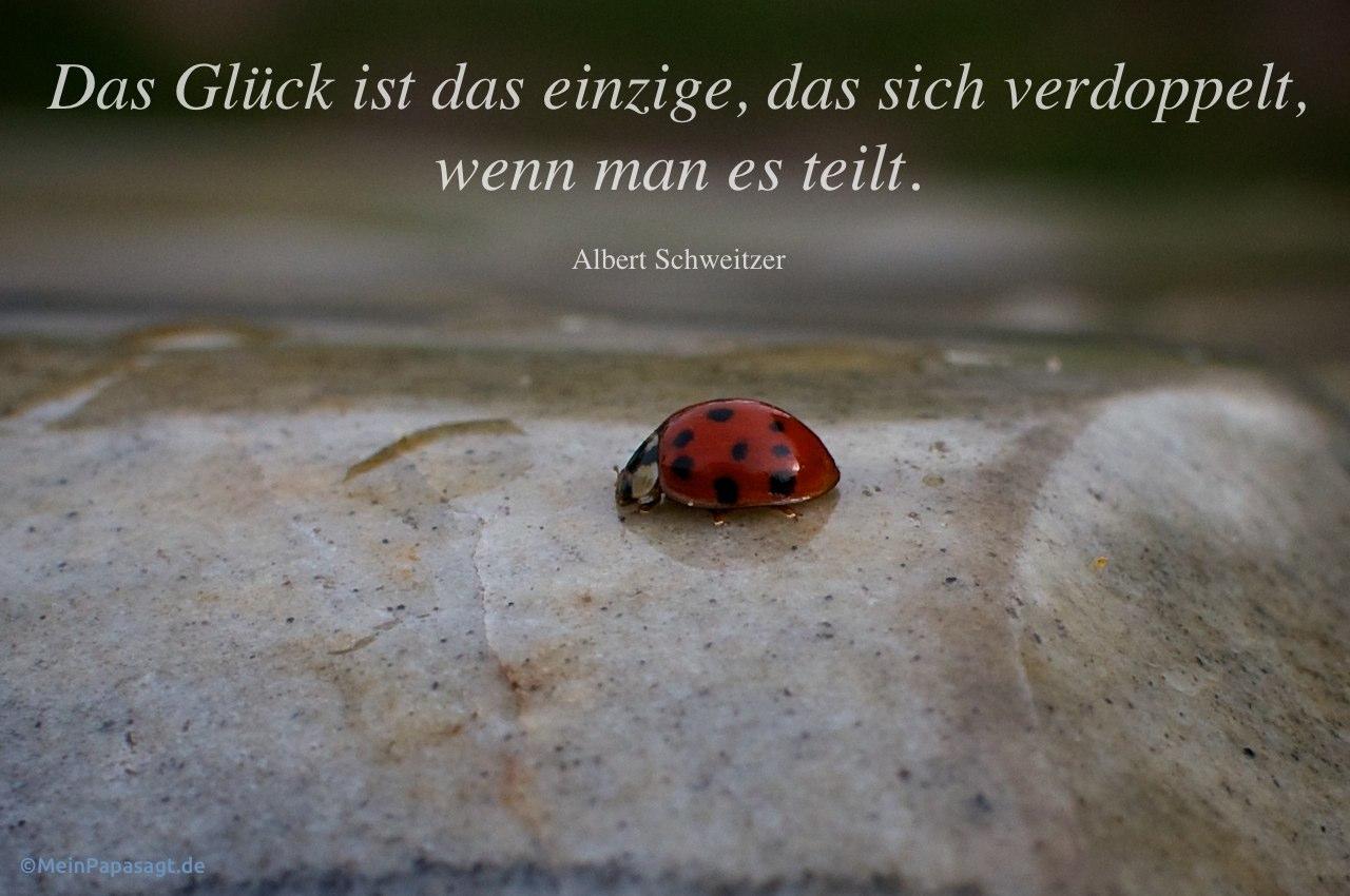 Marienkafer Auf Stein Mit Dem Schweitzer Zitat Das Gluck Ist Das Einzige Das Sich
