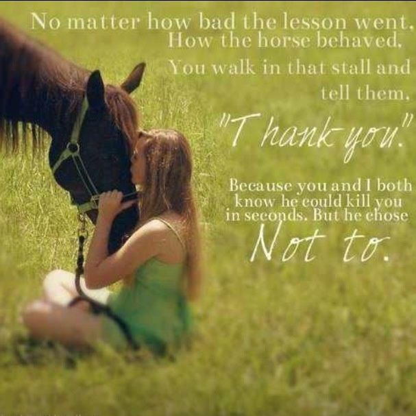 Equestrian Quotes And Sayings Horse Quote Horses