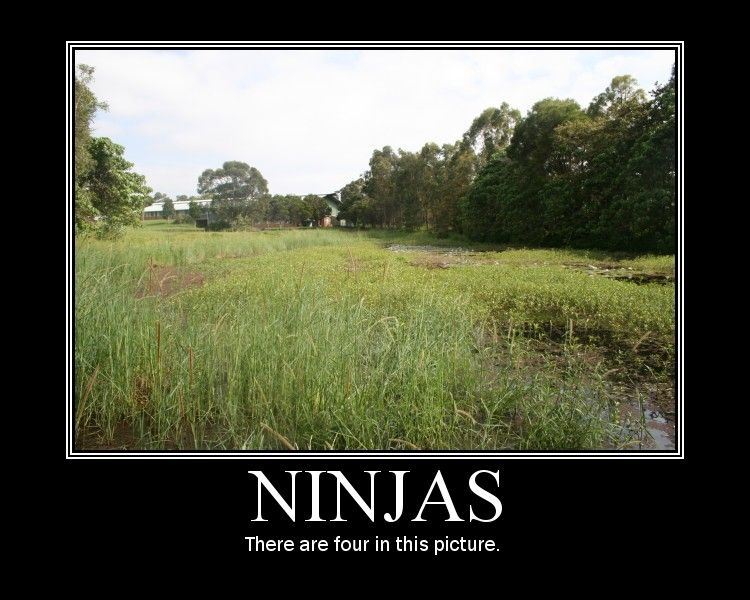 Ninjas Funny Pictures Funny Photos Funny Images Funny Pics Funny Quotes