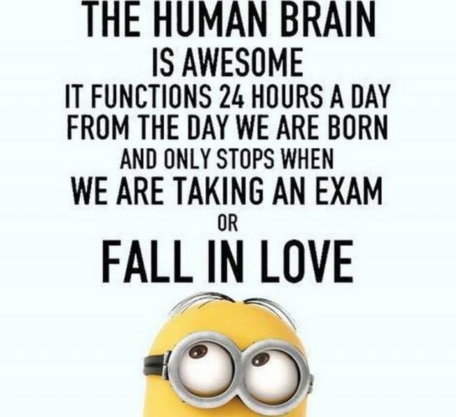 Funny Minion Love Quote Pictures Photos And Images For Facebook