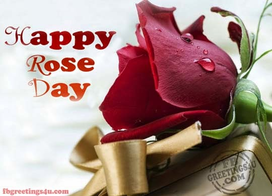 Happy Rose Day Pictures For Facebook Whatsapp
