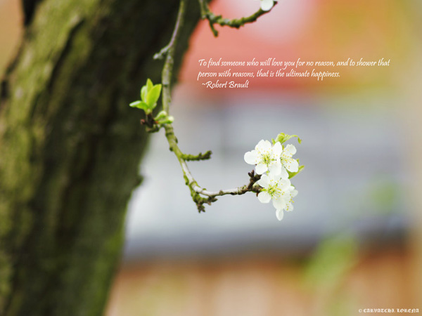 Nature Love Couple Quotes Hover Me