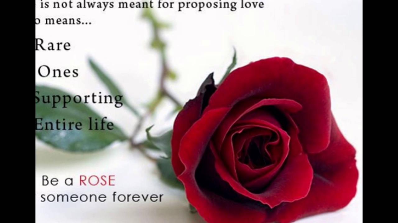Rose Day  Status Fb Whatsapp Timeline Cover Images Download