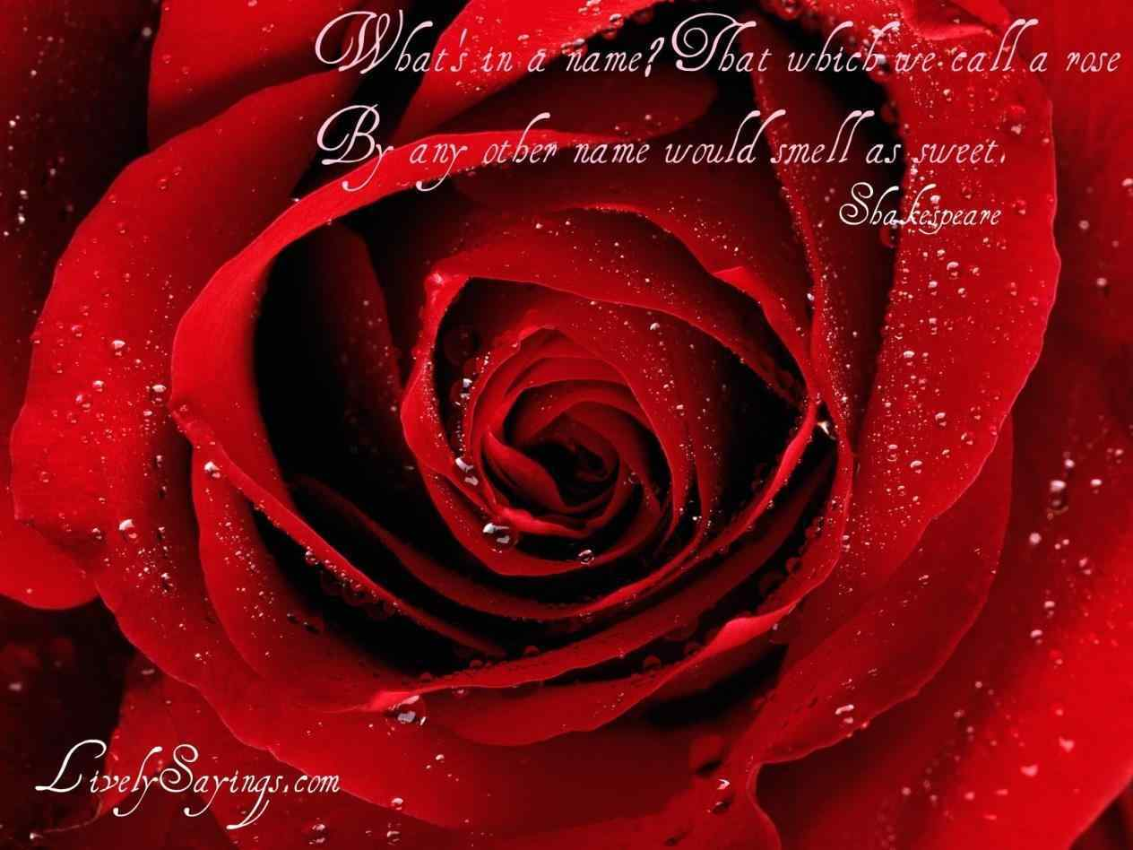 Red Roses Tumblr Quotes Images Symbol Of Love Heart Touching Beautiful With Symbol Quotes About Red Roses Of Love Heart Touching Quotes
