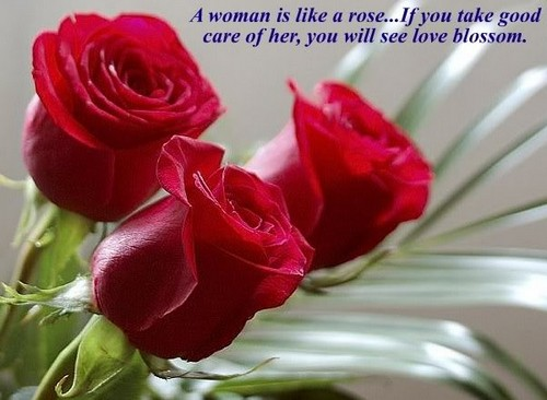 Love Quotes With Rose Pics Hover Me