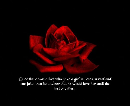 I Loved You And You Love Me And That Is All It Has To Be Just Like A Rose Meant For You And Me