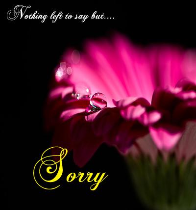 I Am Sorry Dear
