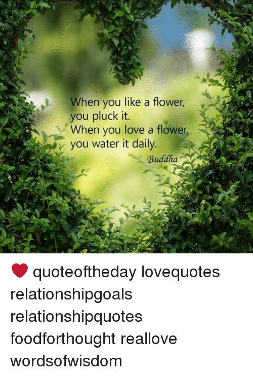 Love Memes And Buddha When You Like A Flower You Pluck It