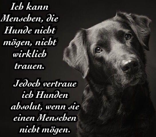 Labrador Zitat Hund