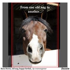 Animated Birthday Greetings For Facebook Equine Nag Google Search