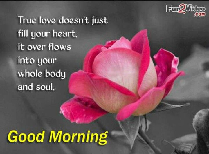 Good Morning Love Quotes For True Love And These Cute Good Morning Pictures With Heart Touching Quotes Help You To Wish Good Morning Your Love Ones