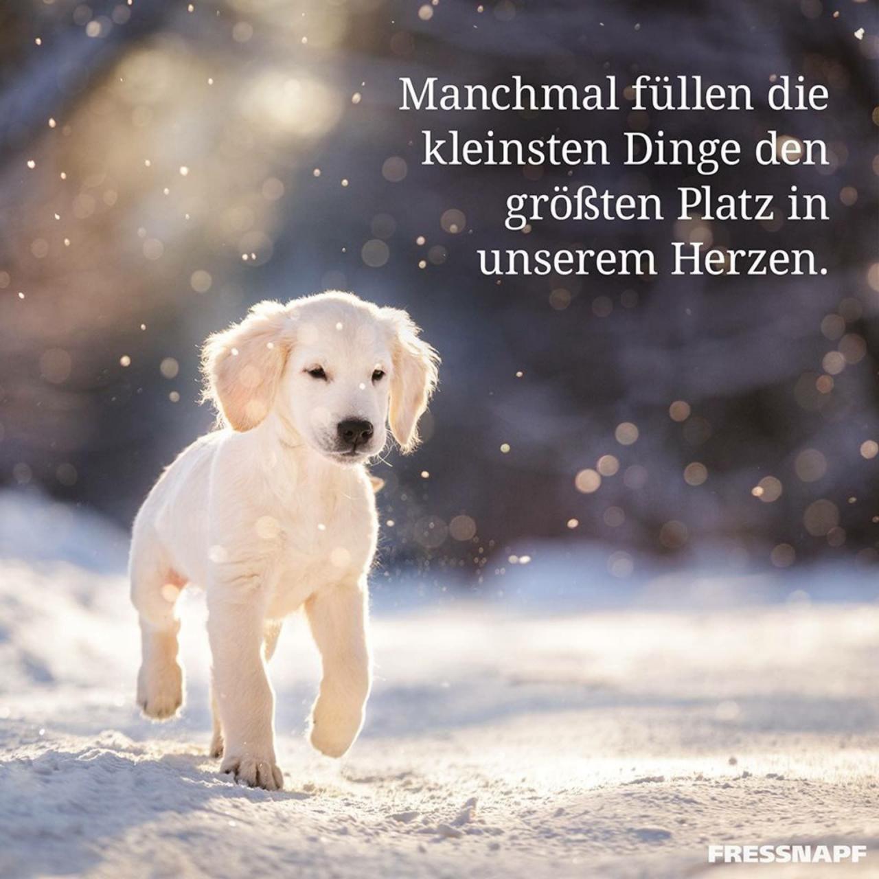 Hunde Erziehen Gluckliche Hunde Weisheiten Spruche Lebensweisheiten Hund Spruche Gluckliches Leben Wahre Geschichten Spruche Furs Herz Gute Menschen