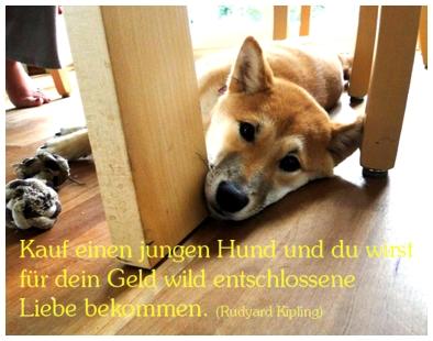 Ein Kleiner Hund Der Dir Das Gesicht Leckt Ist Der Beste Psychiater Der Welt Bernard Williams