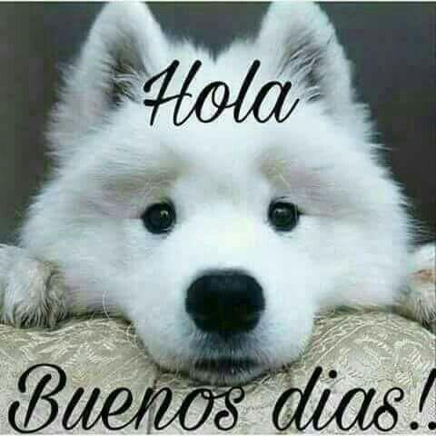 Gute Nacht Morgen Spanisch Memes Guten Morgen Zitate Zum Thema Morgen Glanze Zitate Glucklicher Tag Es Tut Weh Hunde