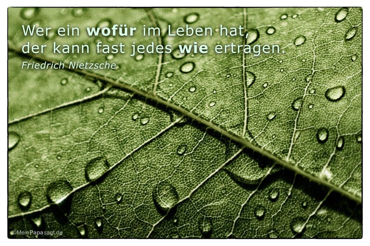Regentropfen Auf Einem Blatt Mit Dem Friedrich Nietzsche Zitat Wer Ein Wofur Im Leben Hat
