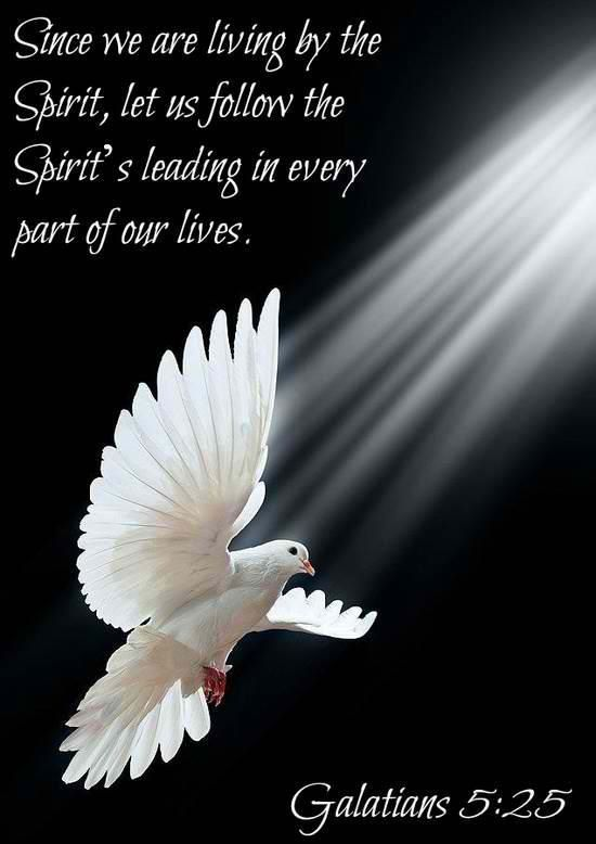 Inspirational  C B Follow The Spirits Leading White Dovesp O