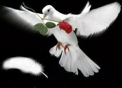 Best Doves And Red Roses Images On Pinterest White Doves Holy Spirit And Holy Ghost