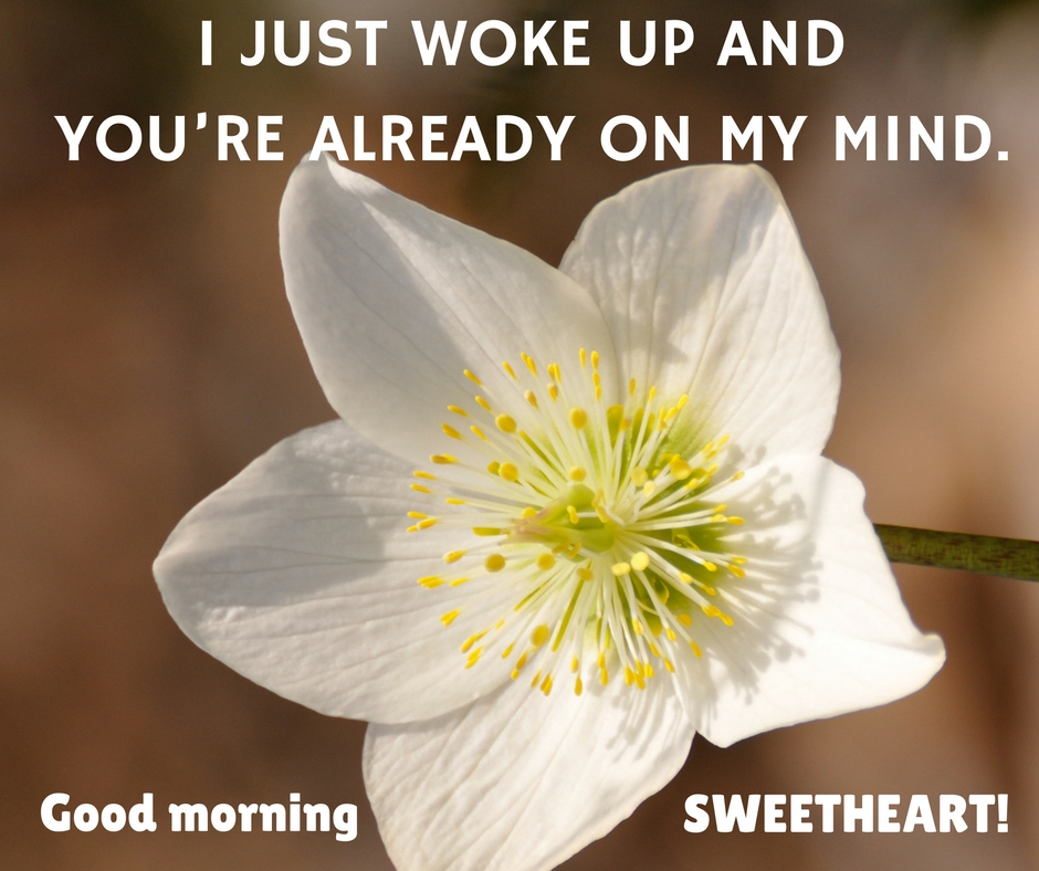 Good Morning Love Quotes For Her Give Her Words Of Love Each