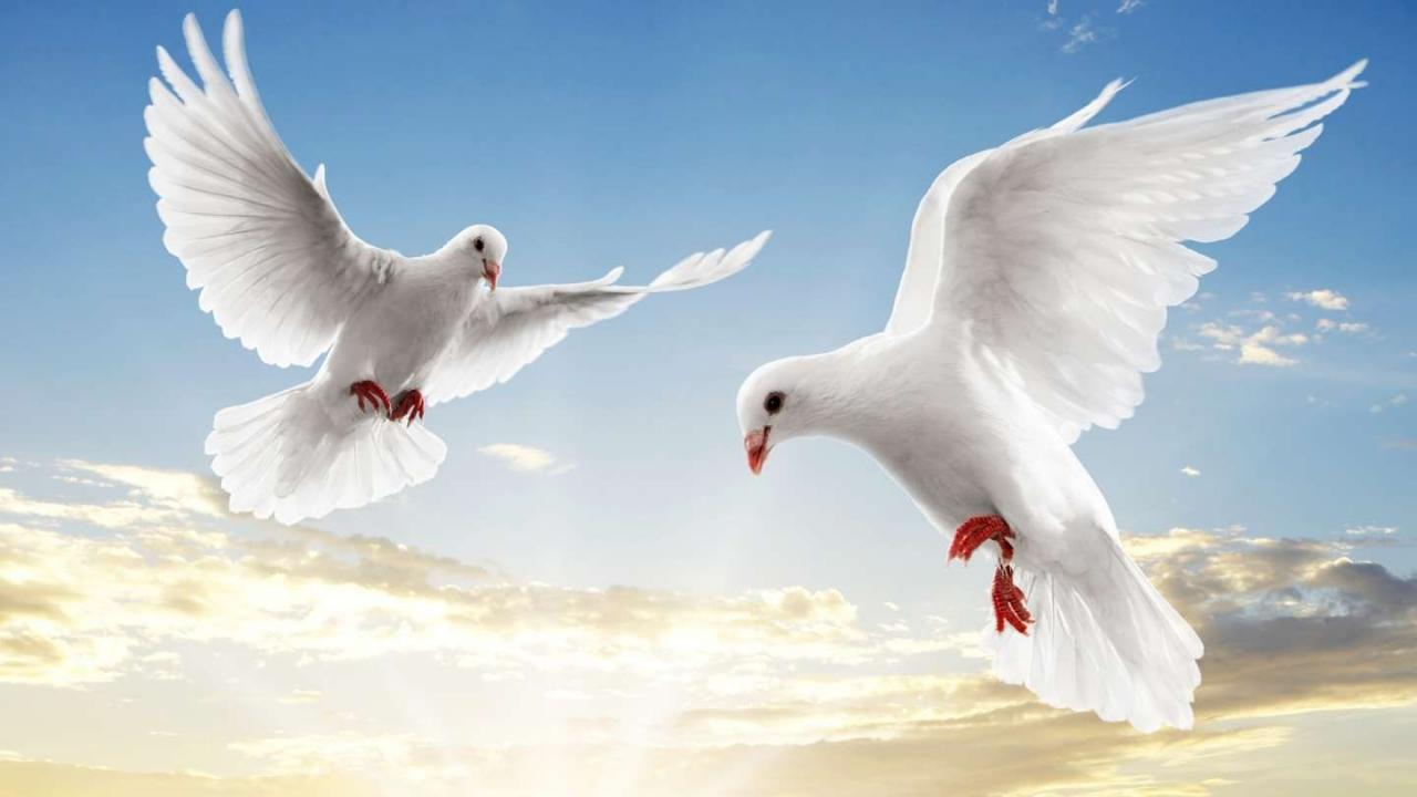 Flying White Doves Backgrounds  C B Peace And Love Quotesquotes